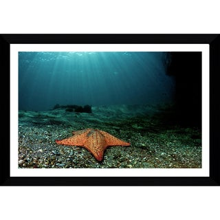Craig Dietrich 'Shining Star' Framed Plexiglass Underwater Photography