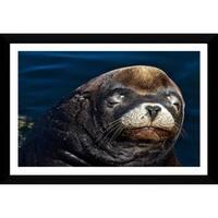 Craig Dietrich 'Sleeyhead' Framed Plexiglass Underwater Photography