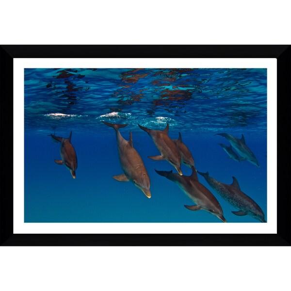 Craig Dietrich 'Takin A Dive' Framed Plexiglass Underwater Photography
