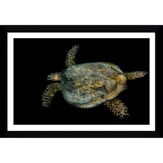 Craig Dietrich 'Tribal Turtle' Framed Plexiglass Underwater Photography