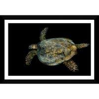 Craig Dietrich 'Tribal Turtle' Framed Plexiglass Underwater Photography
