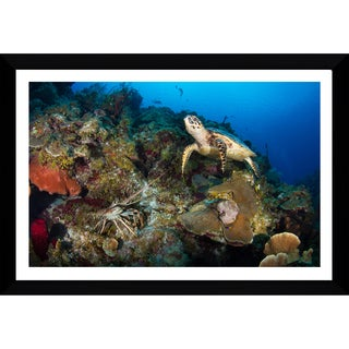 Craig Dietrich 'Underewater Friends' Framed Plexiglass Underwater Photography