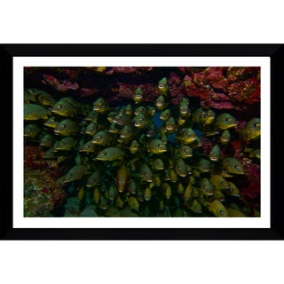 Craig Dietrich 'Underwater Traffic' Framed Plexiglass Underwater Photography