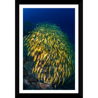 Craig Dietrich 'Yellow Burst 2' Framed Plexiglass Underwater Photography