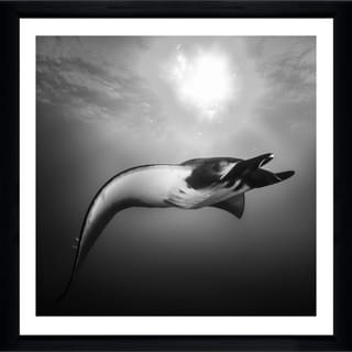 Craig Dietrich 'Black & White Beauty' Framed Plexiglass Underwater Photography