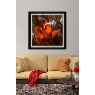 Craig Dietrich 'Clown Close Up' Framed Plexiglass Underwater Photography