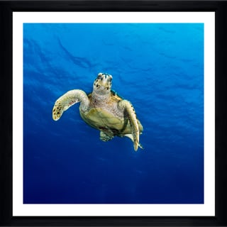 Craig Dietrich 'Curious Turtle' Framed Plexiglass Underwater Photography
