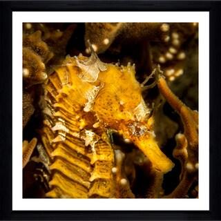 Craig Dietrich 'Golden Horse' Framed Plexiglass Underwater Photography