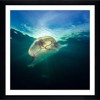 Craig Dietrich 'Jelly Key Largo' Framed Plexiglass Underwater Photography