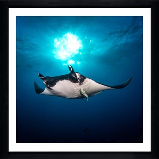 Craig Dietrich 'Sun Light Manta' Framed Plexiglass Underwater Photography