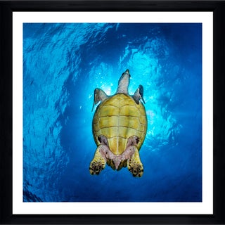 Craig Dietrich 'Sunlit Turtle' Framed Plexiglass Underwater Photography