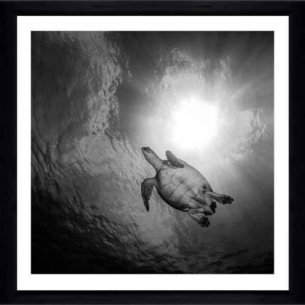 Craig Dietrich 'Turtle Turtle' Framed Plexiglass Underwater Photography
