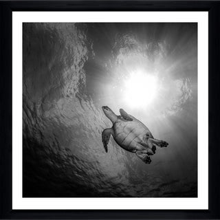 Craig Dietrich 'Turtle Turtle' Framed Plexiglass Underwater Photography