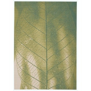 Nourison Coastal Green Area Rug (10' x 13')
