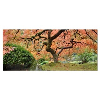 Designart 'Old Japanese Maple Tree' Landscape Photography Metal Wall Art