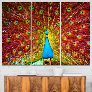 Peacock Dancing - Animal Photography Canvas Art Print