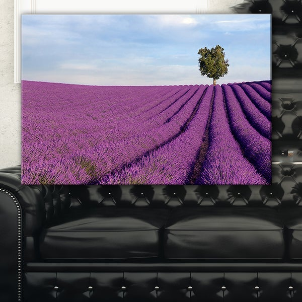 Lavender Field with Solitary Tree - Landscape Photo Canvas Print