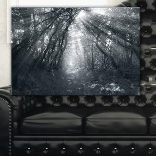 Sun Rays Through Gray Trees - Landscape Photography Wall Art