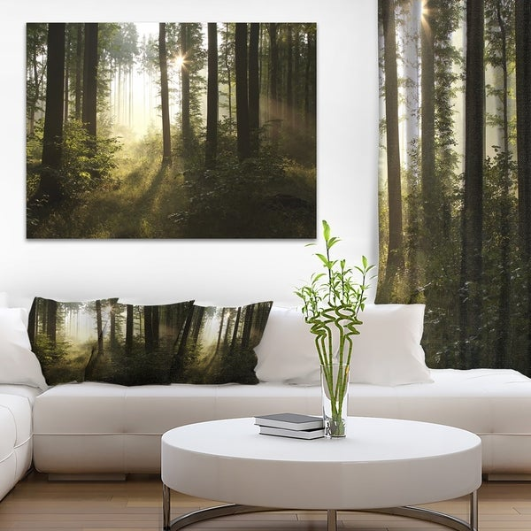 Early Morning Sun in Misty Forest - Landscape Photo Canvas Print - Green
