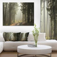 Dark Green Forest with Sun Rays - Landscape Photo Canvas Print