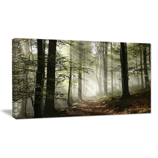 Light in Dense Fall Forest with Fog - Landscape Canvas Art Print (4 options available)