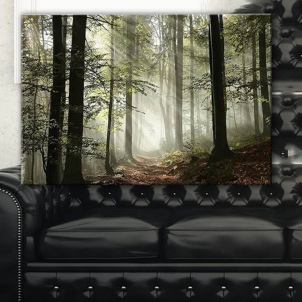 Light In Dense Fall Forest With Fog Landscape Canvas Art