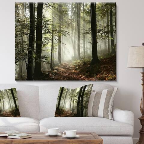 Designart 'Light in Dense Fall Forest with Fog' Landscape Canvas Art Print