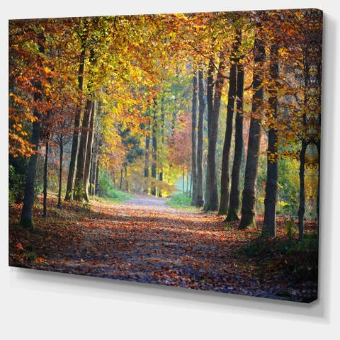 Designart 'Wide Pathway in Yellow Fall Forest' Landscape Photography Wall Art
