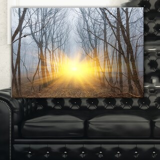 Yellow Sun Rays in Misty Forest   - Landscape Photo Canvas Print