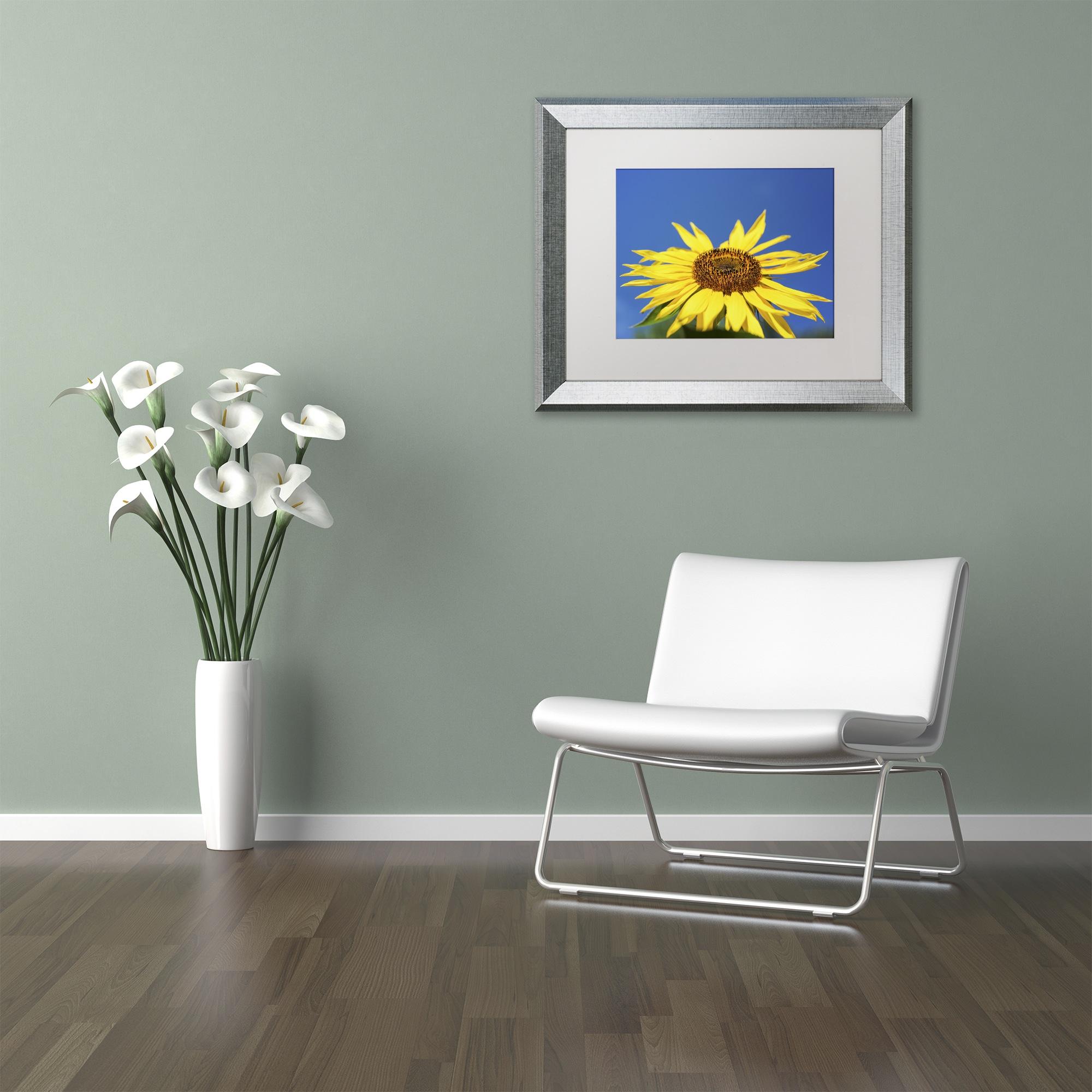 Trademark Kurt Shaffer 'Facing the Sun II' Matted Framed ...