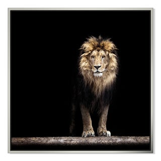Baranov 555 'Lion In The Dark' Canvas Floater Frame