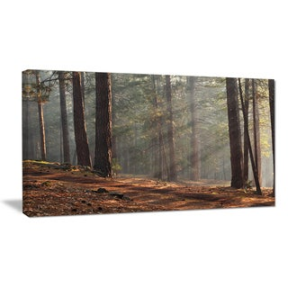 Rays of Sun in Dense Forest - Landscape Photo Canvas Art Print