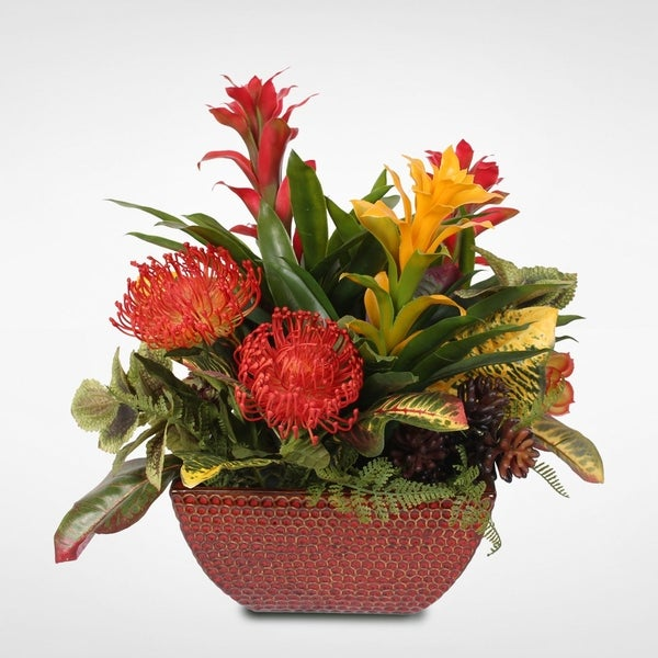 Tropical Bromelia Plants in Ceramic Pot