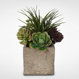 Succulent Arrangement in Concrete Cube