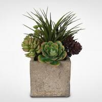 Succulent Arrangement in Concrete Cube