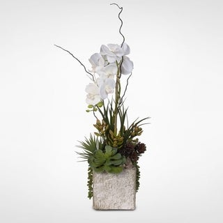 Single Stem Real Touch White Phalaenopsis Orchid with Succulents in a Ceramic Pot