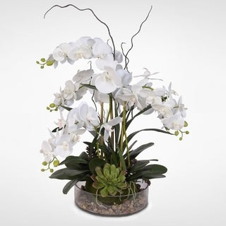 Real Touch White Phalaenopsis Orchid with Succulents and Natural Rocks in a Glass Pot.