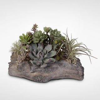Succulent Garden Arrangement in Cement Log