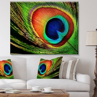 Peacock Feather - Photography Canvas Art Print