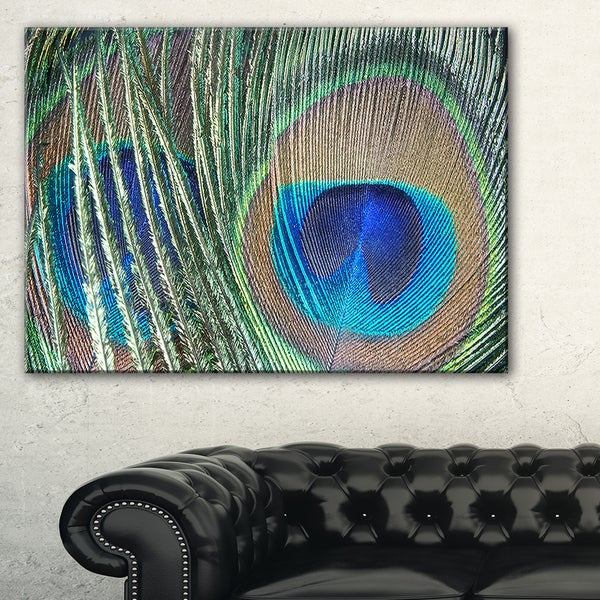 Blue Peacock Feather - Photography Canvas Art Print