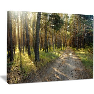 Road Through Green Pine Forest - Landscape Photo Canvas Print