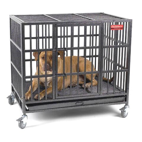 ProSelect Empire Silver Stainless Steel Mobile Dog Kennel