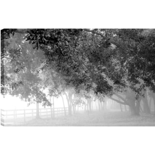 Hobbitholeco. 'Foggy Branches' by P.T. Turk 24-inch x 36-inch Canvas Photography Art