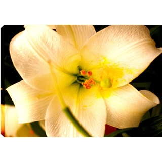 Hobbitholeco., P.T.Turk, Yellow Flower, Landscape Photography 18X24, Gallery Wrapped Ready to Hang Wall Art Decor