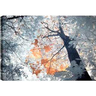 Hobbitholeco. P.T.Turk 'Trees III' 24-inch x 36-inch Ready-to-hang Gallery-wrapped Landscape Photography Wall Art