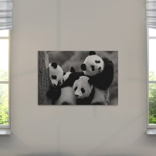 Danita Delimont 'Pandas' Quality Hand-wrapped Canvas