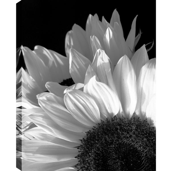P.T.Turk 'Sunflower' Landscape Photography 18X24 Gallery Wrapped Wall Art