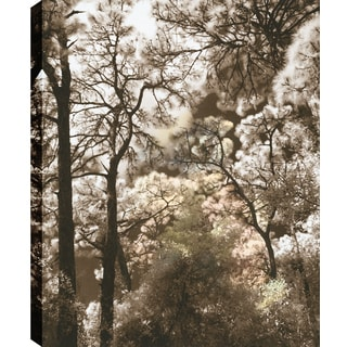 Hobbitholeco., P.T.Turk, Cotton Trees, Landscape Photography Wall Art Decor, Gallery Wrapped 18X24, Ready to Hang.