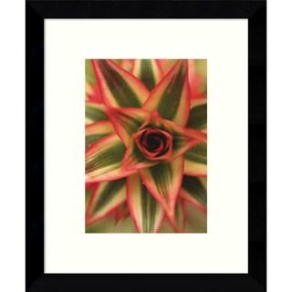 Framed Art Print 'Bronx 1959 (Nature)' by Brian Leighton 9 x 11-inch
