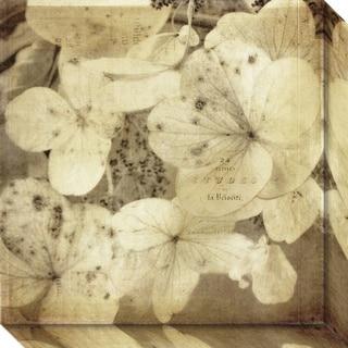 Canvas Art Gallery Wrap 'Hydrangeas 1' by Dawne Polis 20 x 20-inch